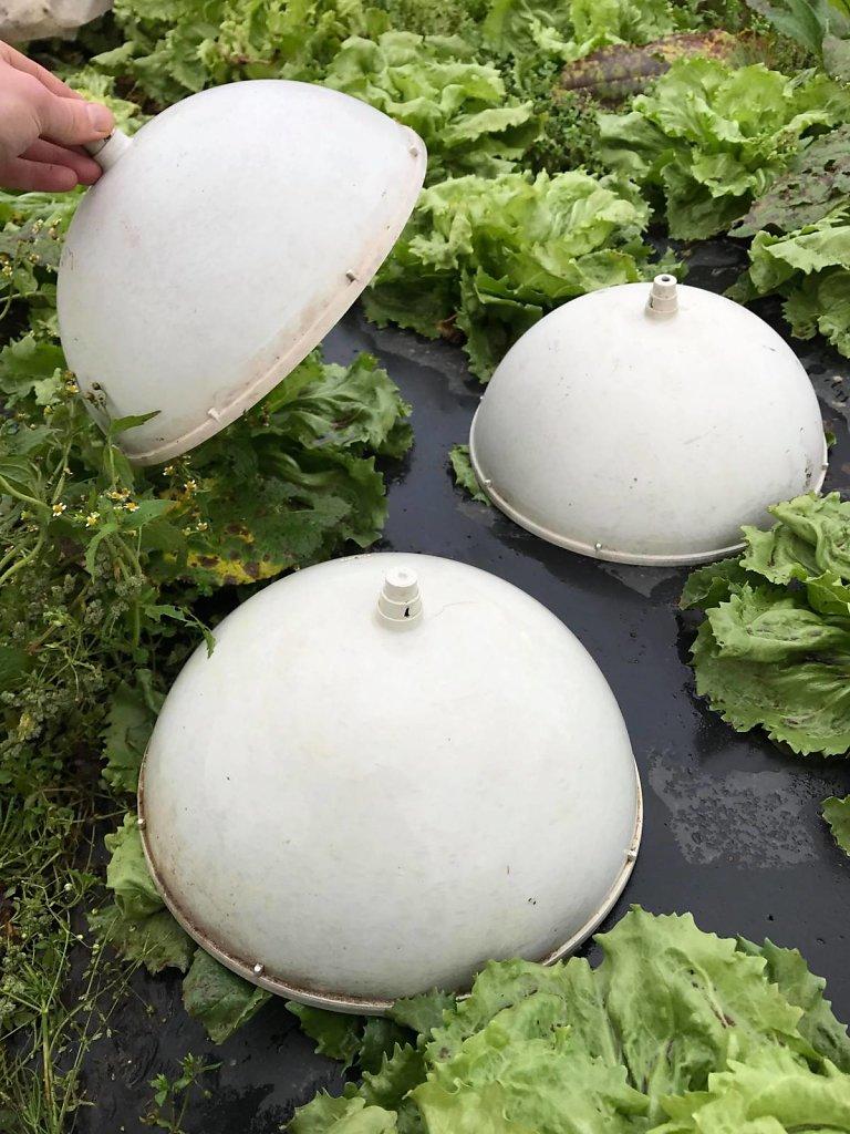 _Réutilisation de Cloches à Salades en luminaires_